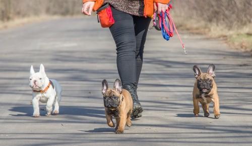 Пожилым жителям Зюзина следует ограничить выгул собак