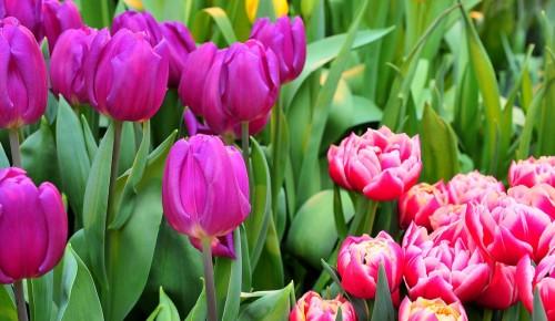 Праздник «Весна идет, весне дорогу!» пройдет в Черемушках