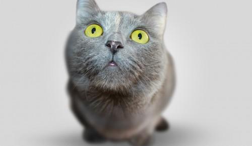Привить животное от бешенства в Котловке можно будет 20 марта