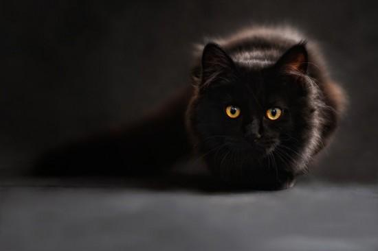 """В центре """"Альмега"""" отметили День кошек"""
