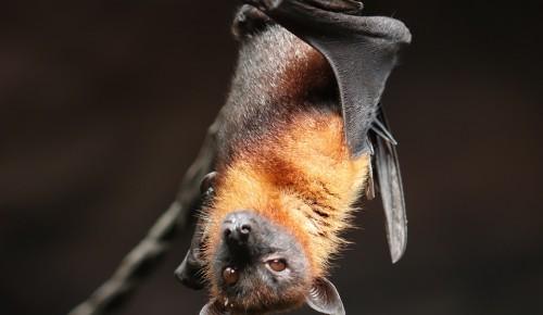 Мосприрода: Летучих мышей в Битцевском лесу можно  встретить летом