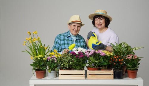 Долголетов Гагаринского района приглашают на онлайн-занятия по садоводству и ландшафтному дизайну