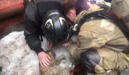 Спасатели из Бутова откачали собаку и кошку, пострадавших при пожаре в Подольске
