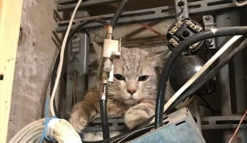 Подъезд в Котловке остался без интернета на два дня из-за застрявшего в щитке кота