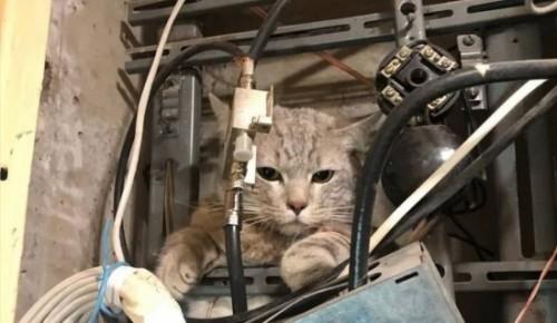 Из-за застрявшего в щитке кота подъезд в Котловке остался без интернета