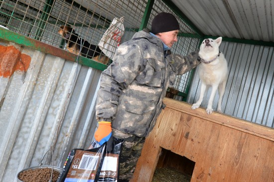 Где найти самого верного друга. В приюте на улице Брусилова более 1600 собак ждут хозяев