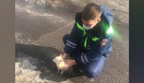 Московские сотрудники Госавтоинспекции спасли собаку и вернули ее хозяйке