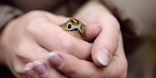 В «Школе позитивных привычек» научат помогать животным