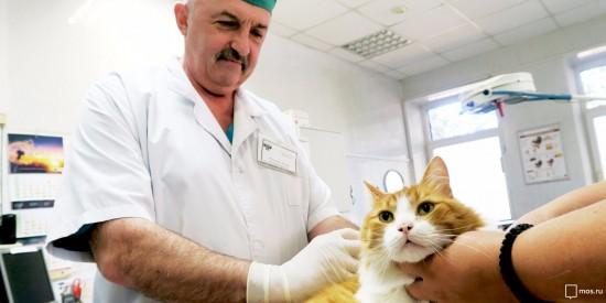 В субботу в Теплом Стане будет работать выездной пункт вакцинации животных
