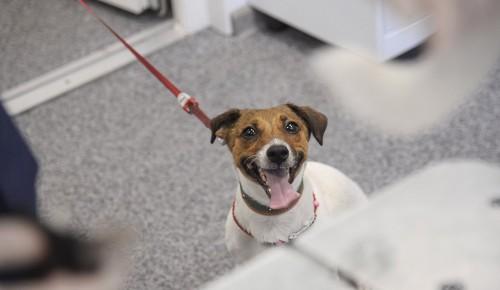 В Теплом Стане завтра можно будет привить домашних животных от бешенства бесплатно