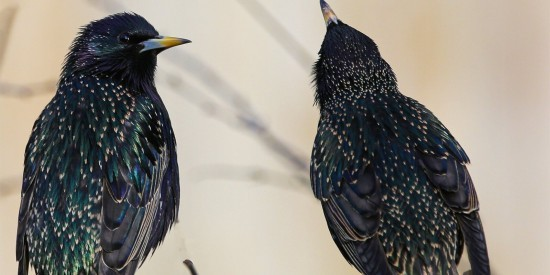 На природных территориях ЮЗАО отметят День птиц