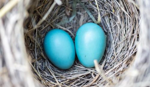 Жители Котловки  могут отметить Международный день птиц в Дарвиновском музее