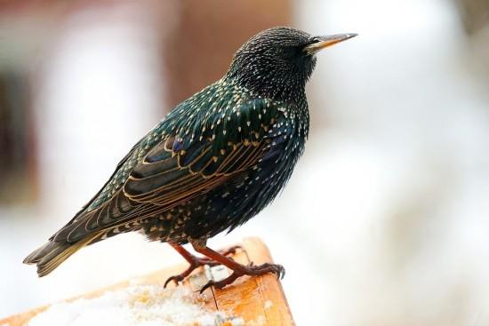 В библиотеке № 195 отметят Международный день птиц