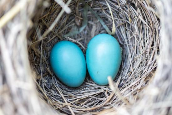 В Дарвиновском музее отметят Международный день птиц 3 апреля