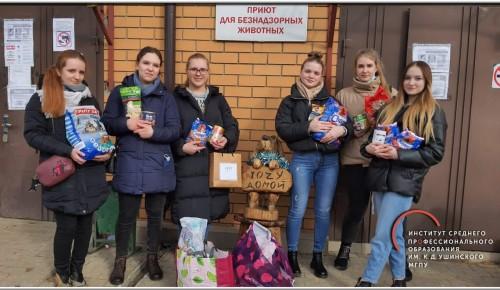 Студентки педагогического колледжа «Черемушки» провели акцию «Лапа помощи»