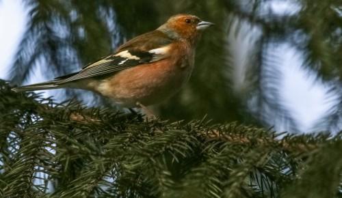 Перелётные птицы возвращаются в Московский регион