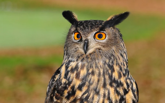 """В экоцентре """"Битцевский лес"""" прочитают сказки и научат узнавать птиц по голосам"""