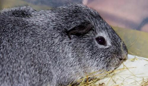 Домашних питомцев-грызунов вылечат в Бутовской ветлечебнице