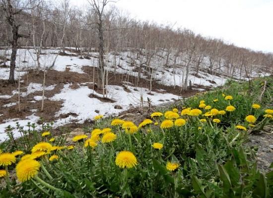 Экологический квест пройдет в Битцевском лесу