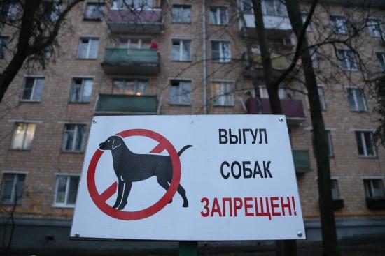 Владельцев собак в Черемушках могут оштрафовать за несоблюдение правил по выгулу