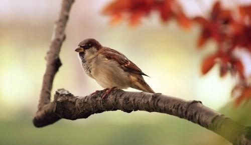 Ко Дню птиц дети с родителями сделали скворечники