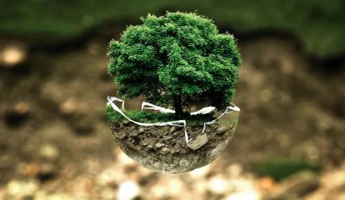 Школьники участвовали в экологической акции