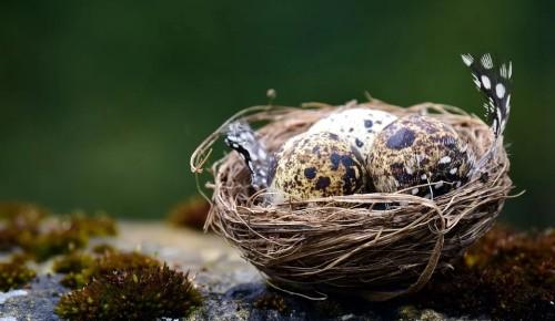 В Битцевском лесу длиннохвостые синицы начали строить гнезда