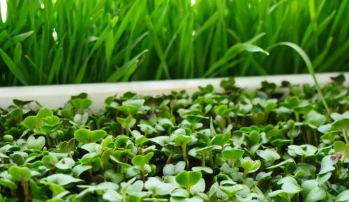 Зачем рассаде дрожжи и скорлупа? Биолог дает советы огородникам