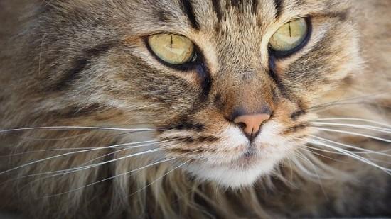 Школа №45 отправила помощь в кошачий приют в Твери