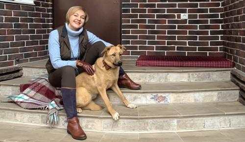В городских приютах для животных своих хозяев ждут 17 тыс. кошек и собак