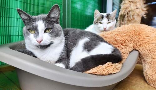 В московских приютах для животных своих хозяев ждут 17 тыс. кошек и собак