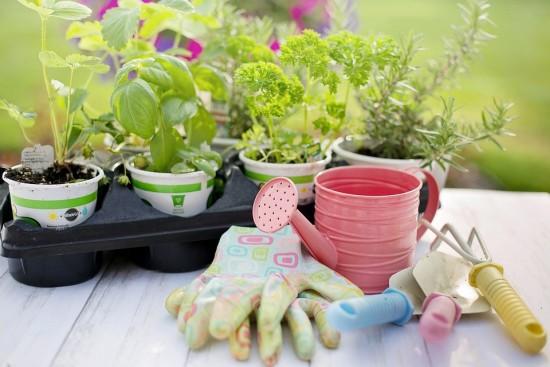 Будущие садовники из числа студентов колледжа «Столица» освоили технологию пикировки растений в Бутово