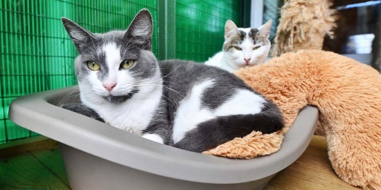 В московских приютах для животных 17 тысяч кошек и собак ждут своих хозяев