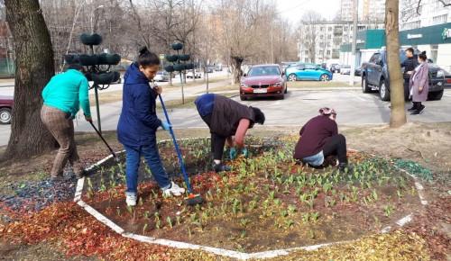 В районе Зюзино покрасили заборы и посадили первые цветы