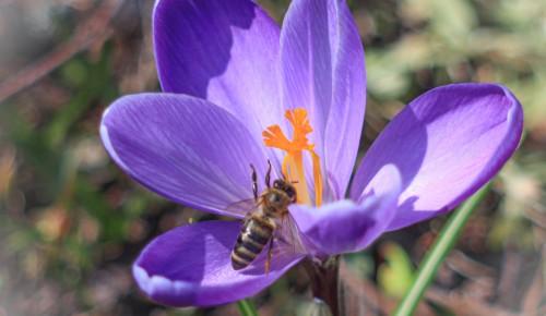 В Ландшафтном заказнике «Теплый Стан» проснулись ежи и пчелы