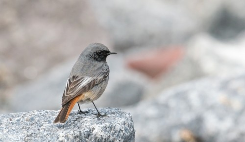 В Дарвиновском музее покажут оборудование для слежения за птицами и животными