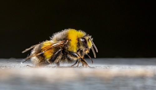Пчелы начали вылетать из ульев на пасеках ЮЗАО