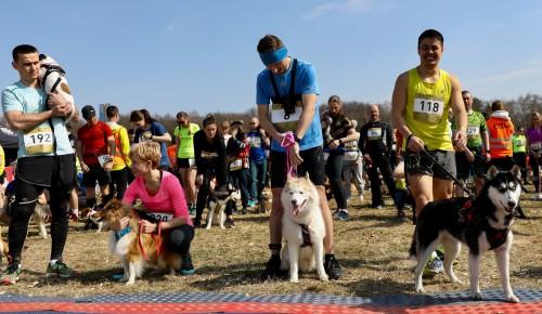В Битцевском парке прошел необычный забег с собаками «Быстрый пёс»