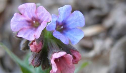 В Битцевском лесу распускаются первые цветы