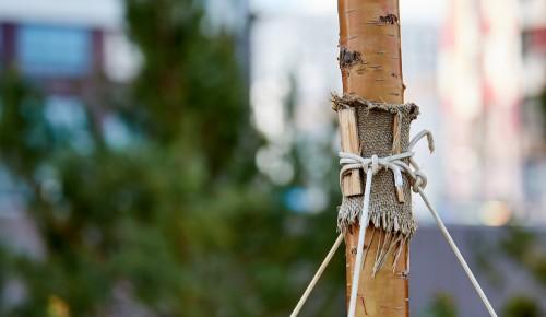 В честь рождения ребенка в Москве можно посадить дерево