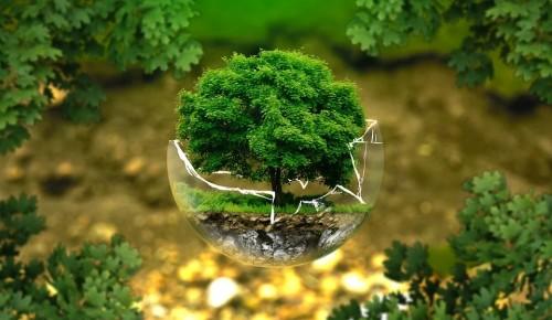 Москвичей пригласили в Культурный центр Агнии Барто на урок экологии