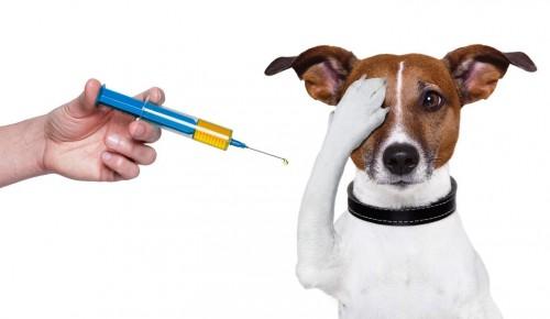 В Ломоносовском районе будет работать пункт вакцинации домашних животных