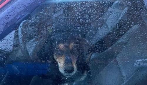 Жители Академического района ищут хозяина, который оставил собаку в машине