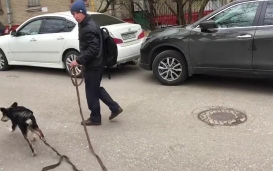 Хозяин запертой в машине собаки нашелся в Академическом районе