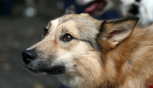 Онлайн-лекции о здоровье животных проведут для посетителей Воронцовского парка