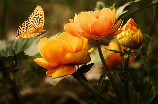 Раннецветущие растения можно увидеть в Битцевском лесу