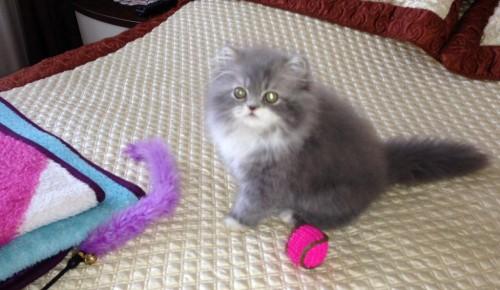 Жители Обручевского района старшего поколения могут присоединиться к клубу домашних животных «Мой друг»
