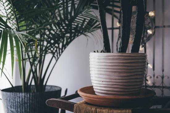 На онлайн-урок по садоводству приглашают жителей старшего поколения из Черемушек