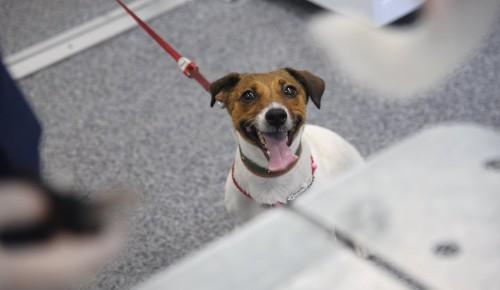 Депутат МГД Мельникова и член ОП РФ Разворотнева провели вебинар о правилах содержания домашних животных