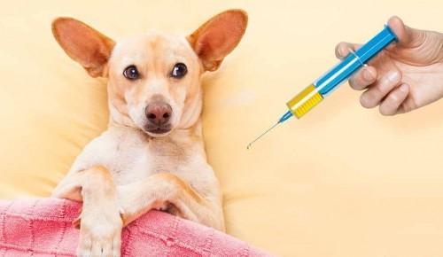 Летом в Ломоносовском районе заработает пункт вакцинации домашних животных